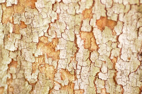 tree bark texture | by Abby Lanes