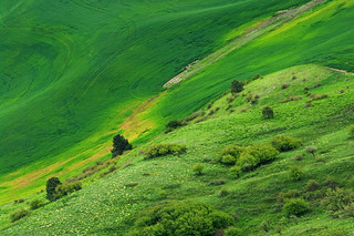 Hillside In The Palouse. | by musicman67