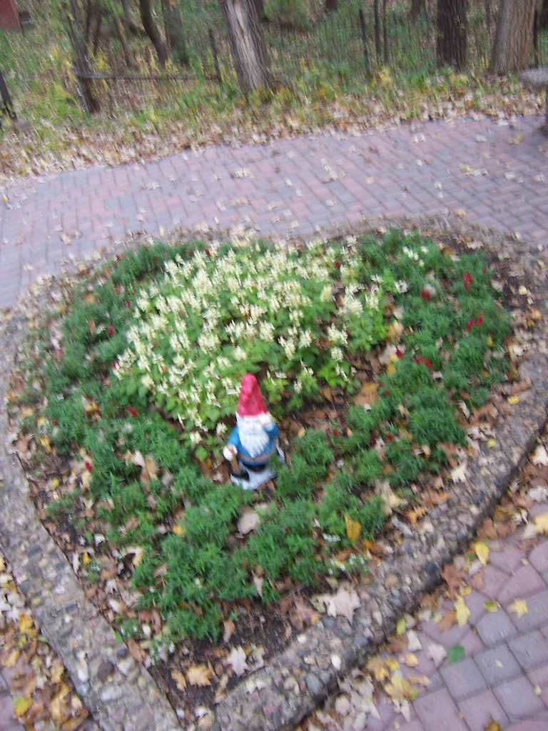 aaron s lawn gnome flickr