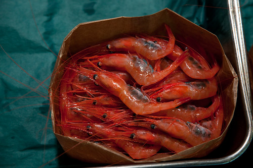 redshrimp | by chez pim