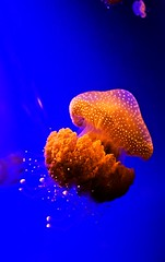 Jelly Yummmm | by picturesbysteve