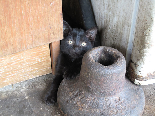 Acclimate A Kitten To New Outside Home