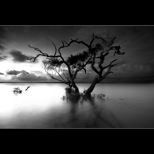 A lone tree is a monument to its tenacity to survive against all odds | by Garry - www.visionandimagination.com