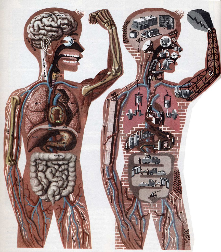 The body works like a machine | From the entry on the human … | Flickr