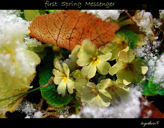 ~ first spring messenger ~ | by together8