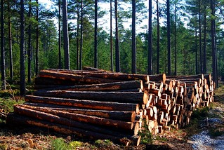 Lumber Business on Fårö | by Let Ideas Compete