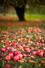 Apple Tree | by Mike NZ