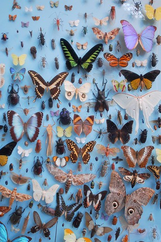 UK - Oxford - University Museum Insects | by Darrell Godliman