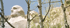 Mount Rushmore Birch Trees | by weanders