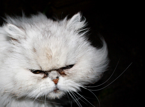 """Angry pussycat   """"If you don't stop lightning my eyes out ..."""