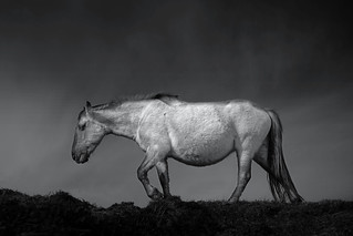 Wild horses 32 | by chrisfriel