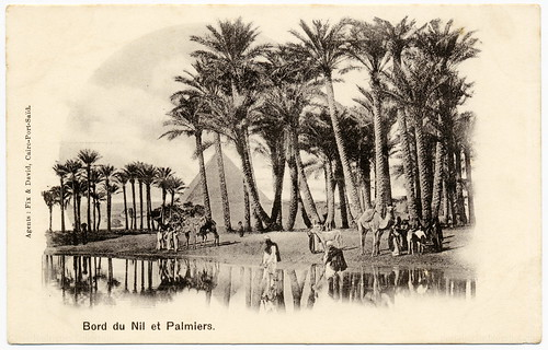 Dreamy Orient: Palm Trees at the Banks of the Nile (c.1902) | by postaletrice