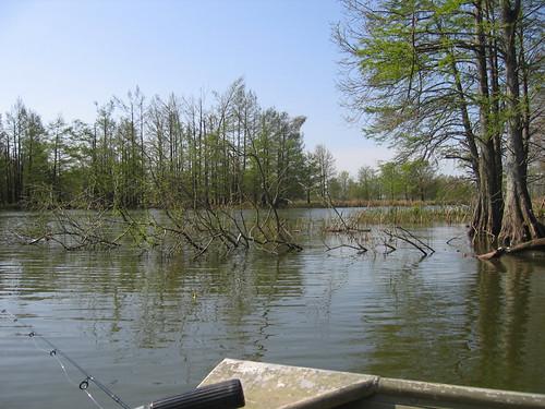 Img 1398 jpg reelfoot lake fishing trip brian moore for Reelfoot lake fishing report