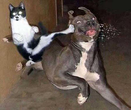 Cat Hugging Dog Meme