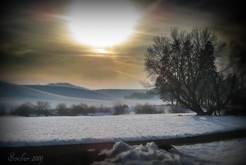 Lonely Winter Sun | by Atom #28