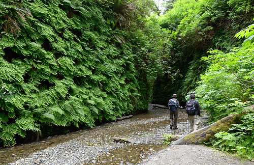 Entering the Fern Canyon | by Waldemar*