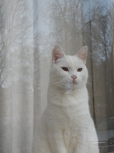 White Cat | by Stan Giling www.stangiling.com
