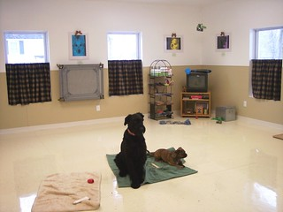 dog training room (west view) | by Acme Canine