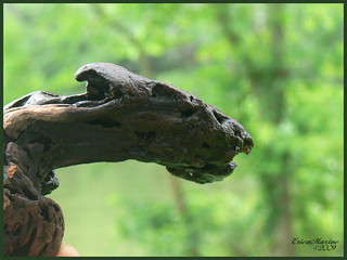 06-14-09   0207 Driftwood~Baby Pterodactyl ?? | by ♥ BeWoLf13 ♥ EriCaMAxiNE **ON AND OFF