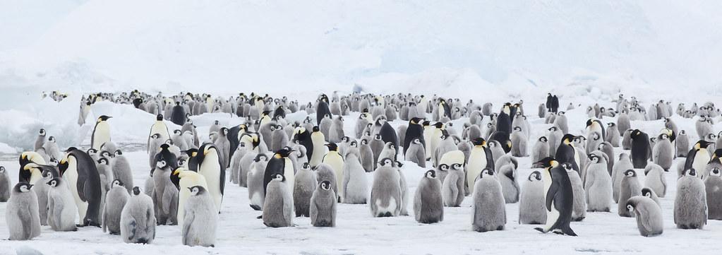 Penguins show