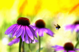 Flowers with Bumble Bee flight | by !.Keesssss.!