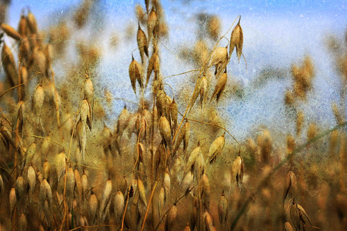 Oats..textured | by nessguide
