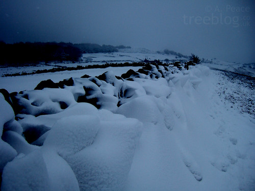 Wind-sculpted snow drifts behind dry stone wall (2nd February 2009) | by treeblog