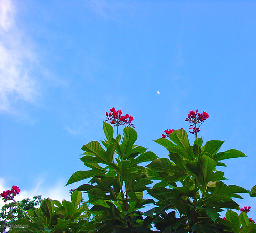 Moon with beautiful sky & flowers | by Puykamo@Tнai