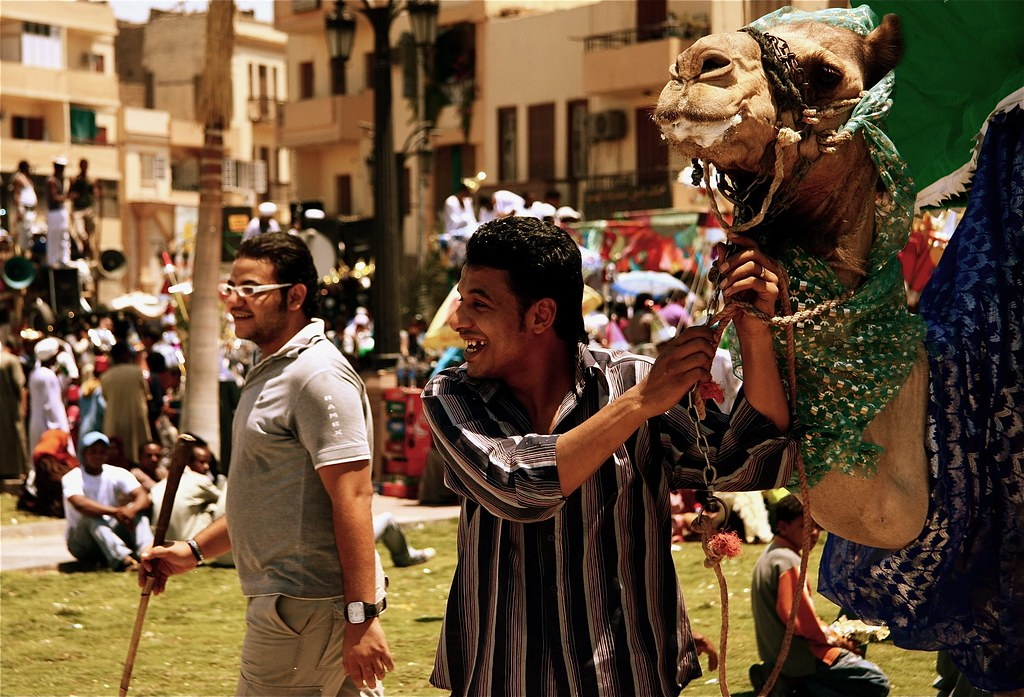 Egyptian Men & A Camel At Sheik Abu al-Haggag's Festival, Luxor