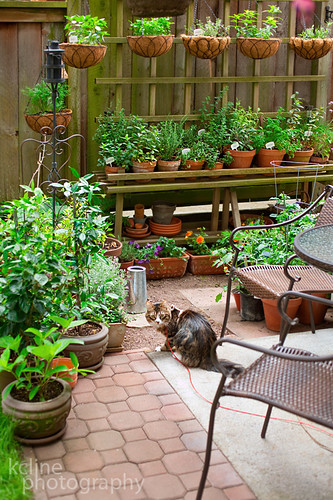 Gaius the Cat & the Garden | by kcline