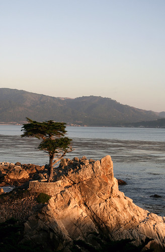 lone cypress | by Jared Ropelato