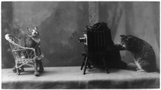 A cat is posed seated on a chair in front of another cat operating a camera. | by Beverly & Pack