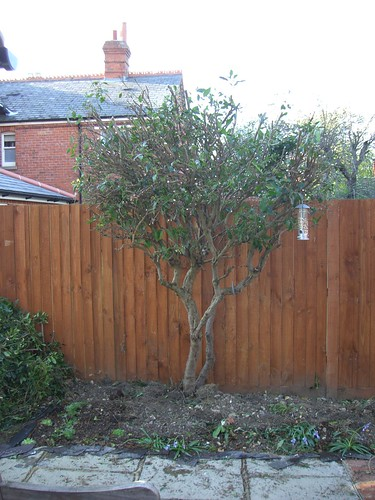 After amatuer pruning | by :: Wendy ::