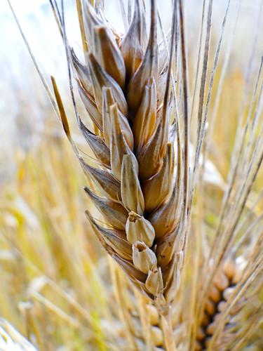 Grain Free Limited Ingredient Cat Food