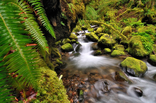 Fern View | by Michael Bollino