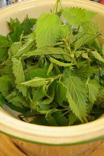 Nettle Pesto | by The Hungry Cyclist