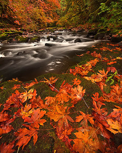 Grist MIll Creek_Washington State | by kevin mcneal