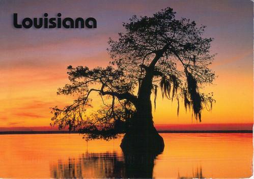 Louisiana Bald Cypress Tree At Sunset Justmeskj
