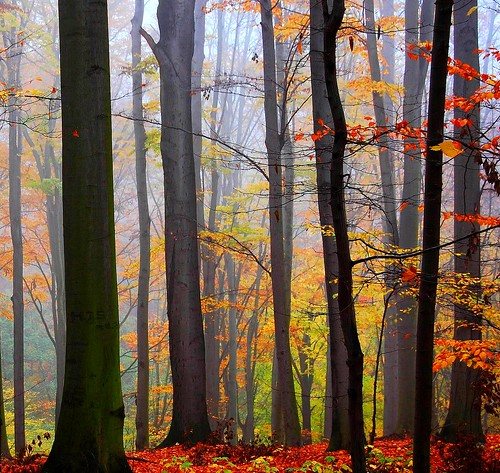Forest Colors.... | by Tobi_2008