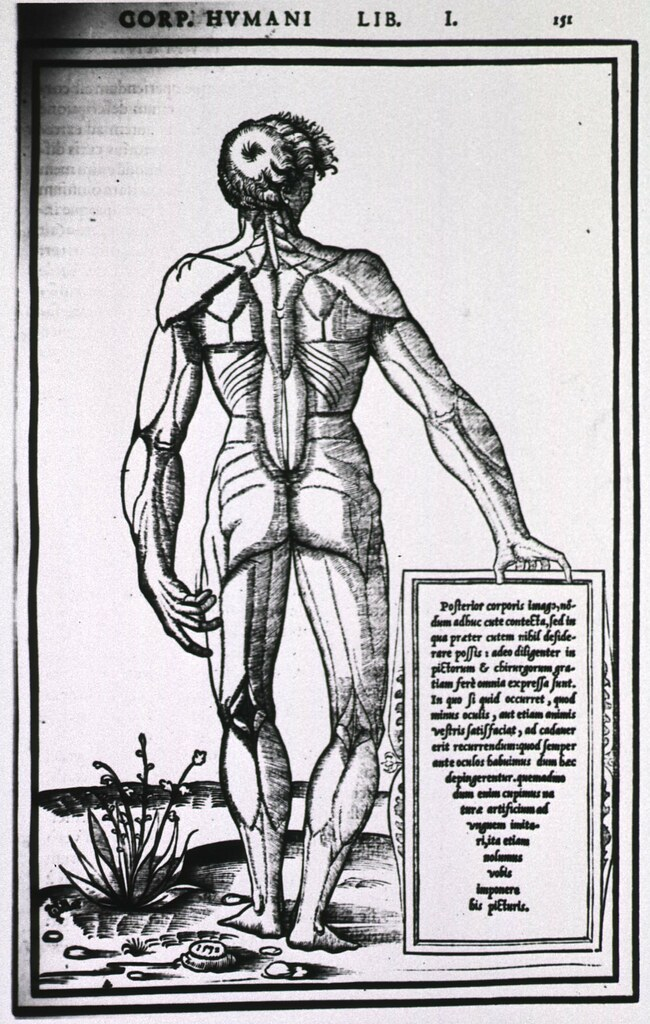 Muscles of the human body | Author(s): Estienne, Charles, 15… | Flickr