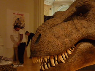 Installation of T.rex - the Killer Question exhibition | by Birmingham Museum and Art Gallery