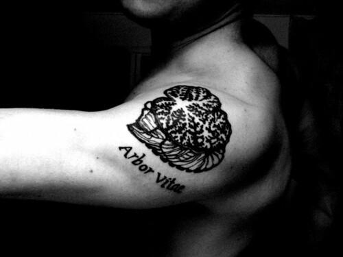 Anatomical Tattoos   Flickr