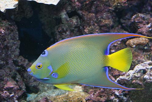 Crazy fish birch aquarium dearest dacia flickr for Crazy fishing vr