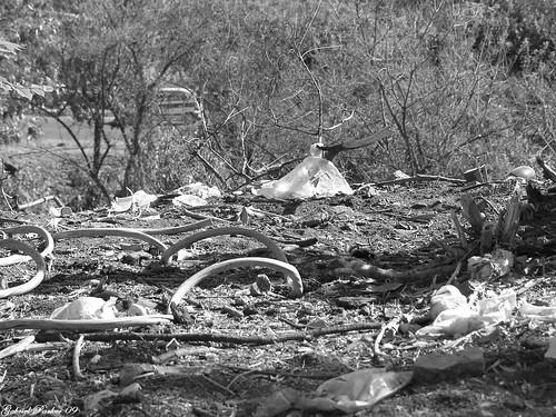 destruction of the ecosystem Pollution and habitat destruction: the human factors contributing to endangerment & extinction  definition & habitat destruction  ecosystems function quite well when left alone they act .