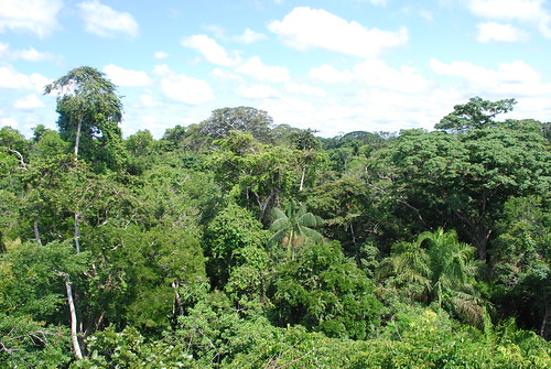 Amazon rainforest near Puerto Maldonado | by Ivan Mlinaric