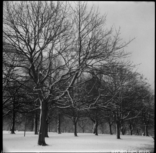 Snow trees | by boncey