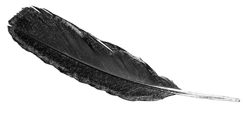 feather sketch | by wplynn