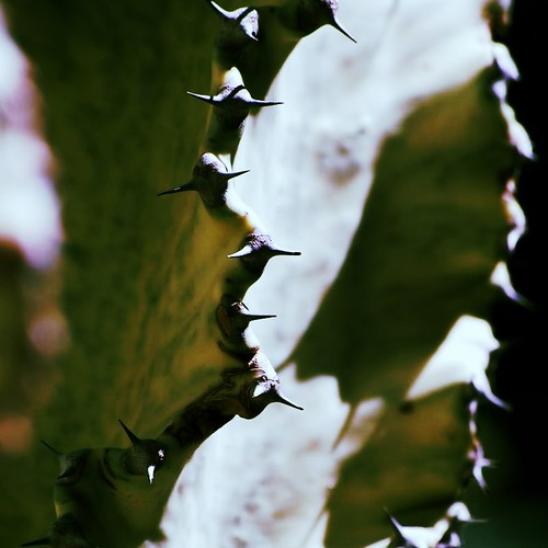 spine | by carlini.sonia