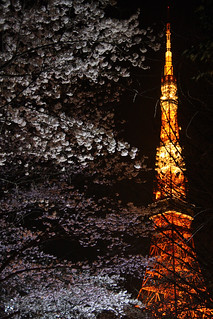 Cherry blossom w/ Tokyo Tower | by ys*