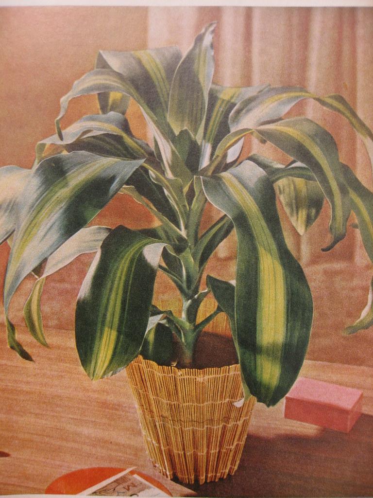 Vintage garden book -- \